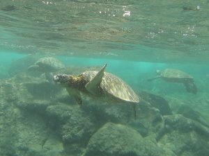 We saw more sea turtles on this trip than we could have possibly imagined.  They're magical.  Three in this photo!